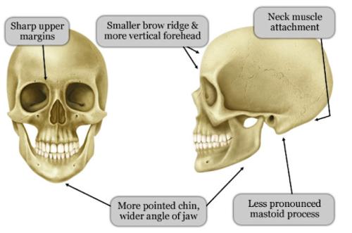 Morphologie facial d'une femme - Dr Franchi à Paris