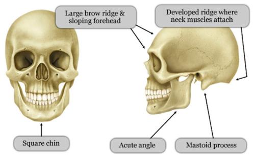 Morphologie facial d'un homme - Dr Franchi à Paris